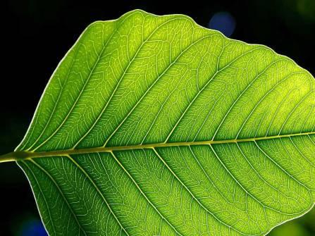 Leaf_1_web